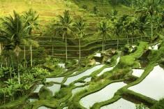 Rice-Terraces-Ubud-Bali-Indonesia.jpg