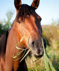 Equine-Horse-Gastro-Solution.jpeg