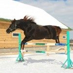 winter-jumping-horse.jpg