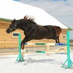 winter-jumping-horse.jpg