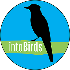 intoBirds